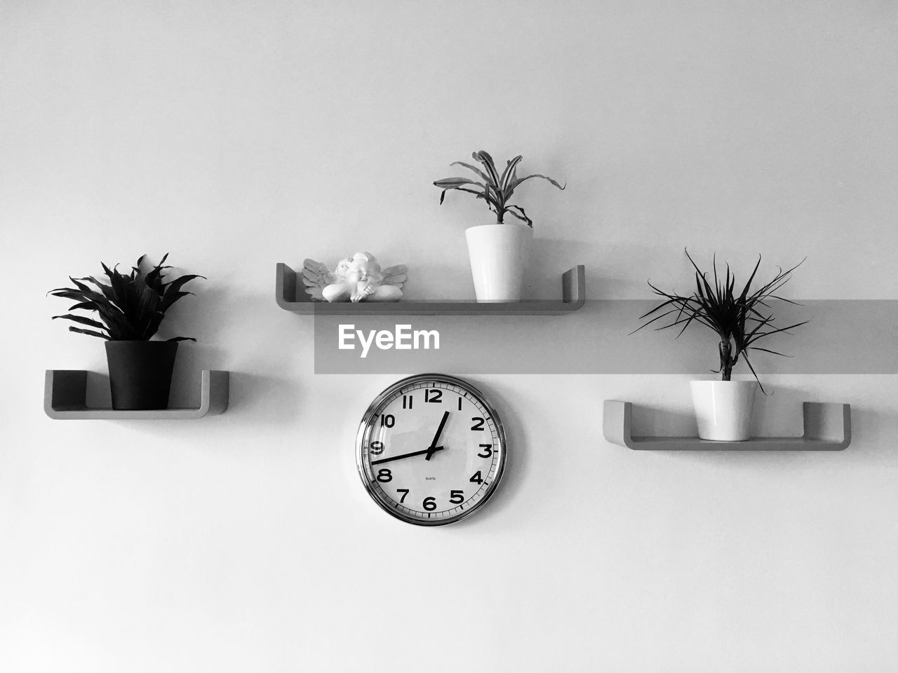 Potted plants and clock on wall