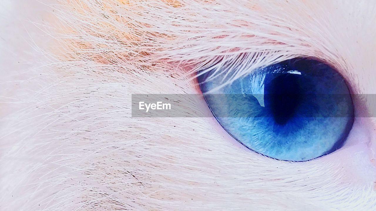 eyelash, backgrounds, eyesight, full frame, human eye, sensory perception, real people, eyeball, close-up, blue, human body part, iris - eye, animal themes, outdoors, day, one person, people