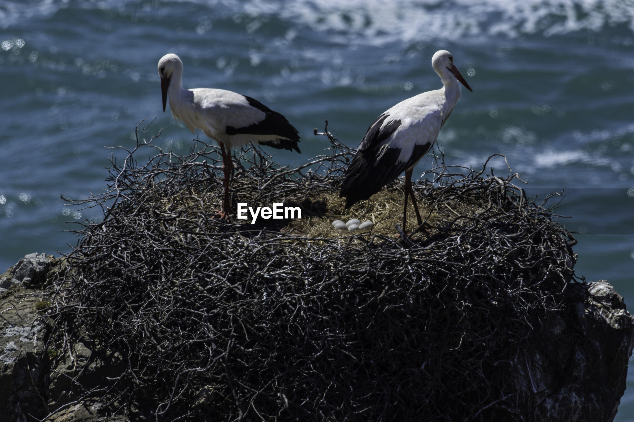 Storks perching on nest by sea