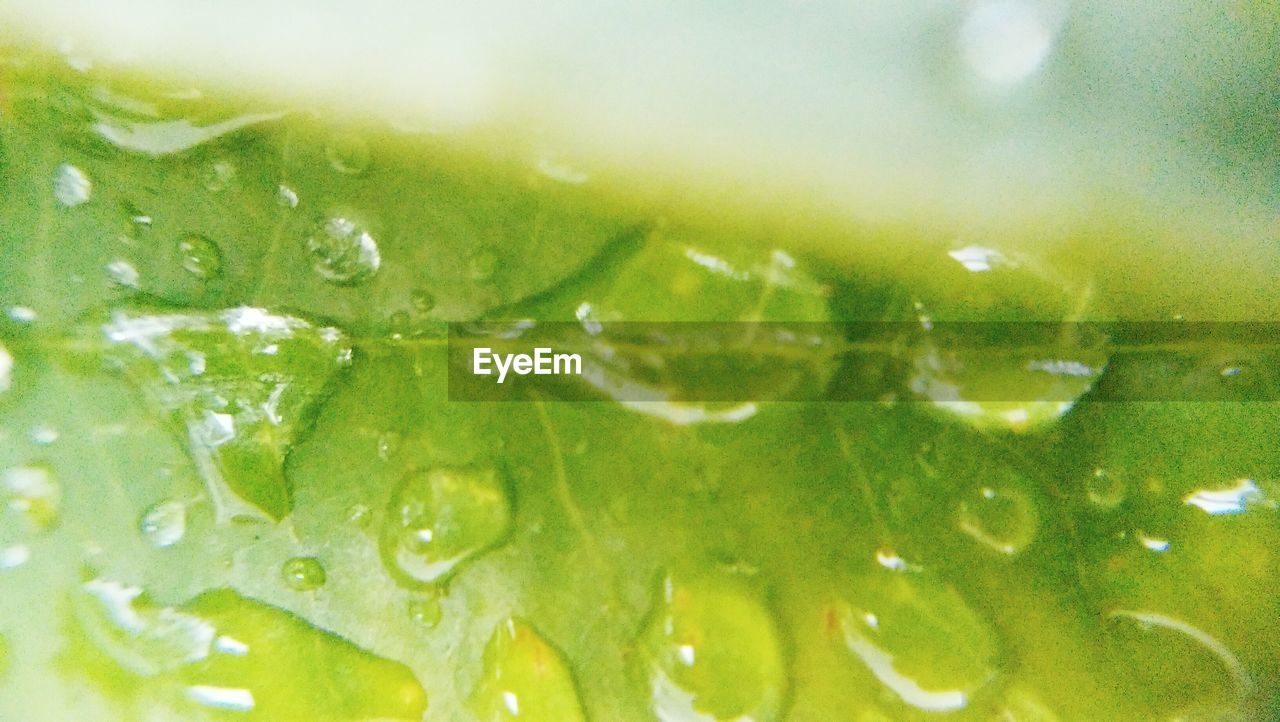 freshness, green color, refreshment, backgrounds, drink, full frame, food and drink, lemonade, close-up, water, fruit, no people, lemon soda, leaf, slice, lime, nature, drinking glass, ice cube, beauty in nature, healthy eating, mojito, tonic water, indoors, day