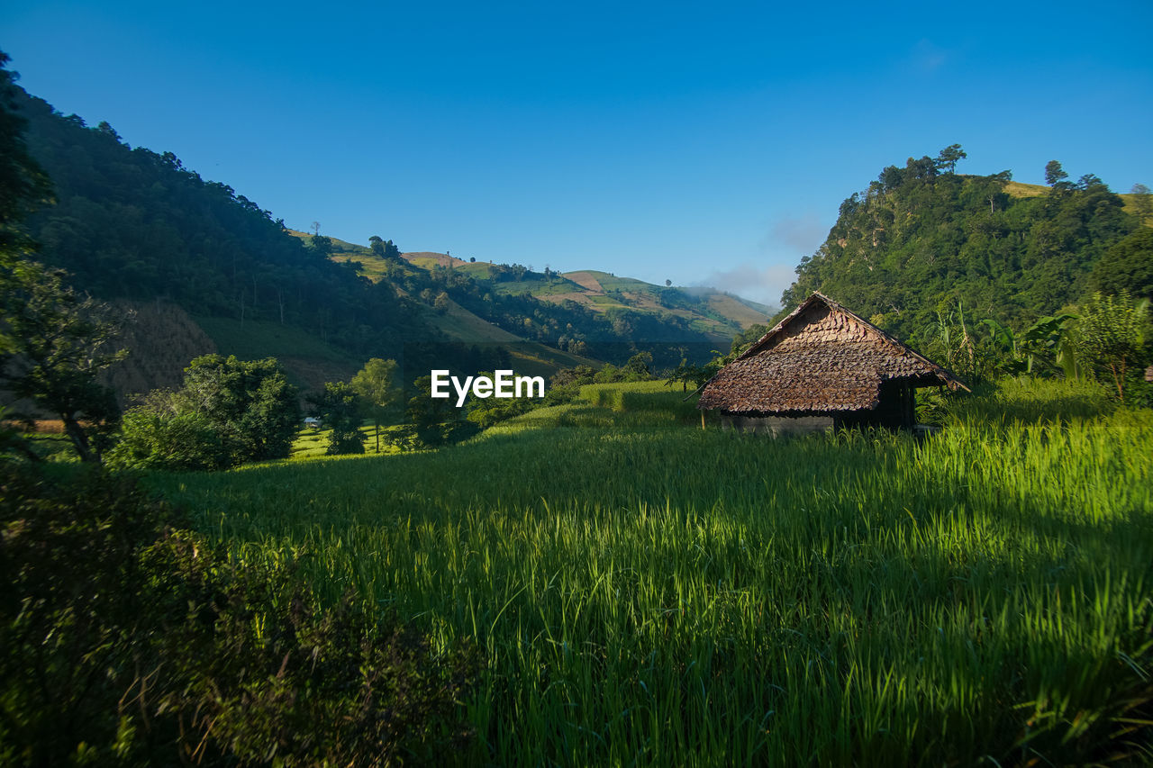 plant, mountain, landscape, green color, sky, environment, beauty in nature, scenics - nature, land, architecture, tree, nature, built structure, no people, house, tranquil scene, growth, tranquility, grass, building, outdoors, cottage