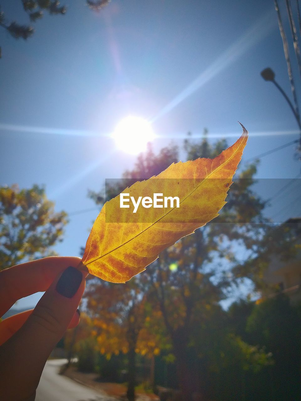 Cropped hand of woman holding autumn leaf against bright sun