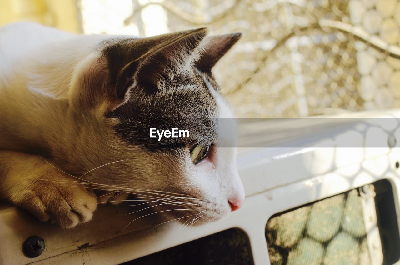 one animal, domestic, animal themes, pets, domestic animals, animal, mammal, cat, feline, domestic cat, vertebrate, focus on foreground, close-up, no people, relaxation, whisker, looking, day, looking away, animal body part, animal head, animal eye