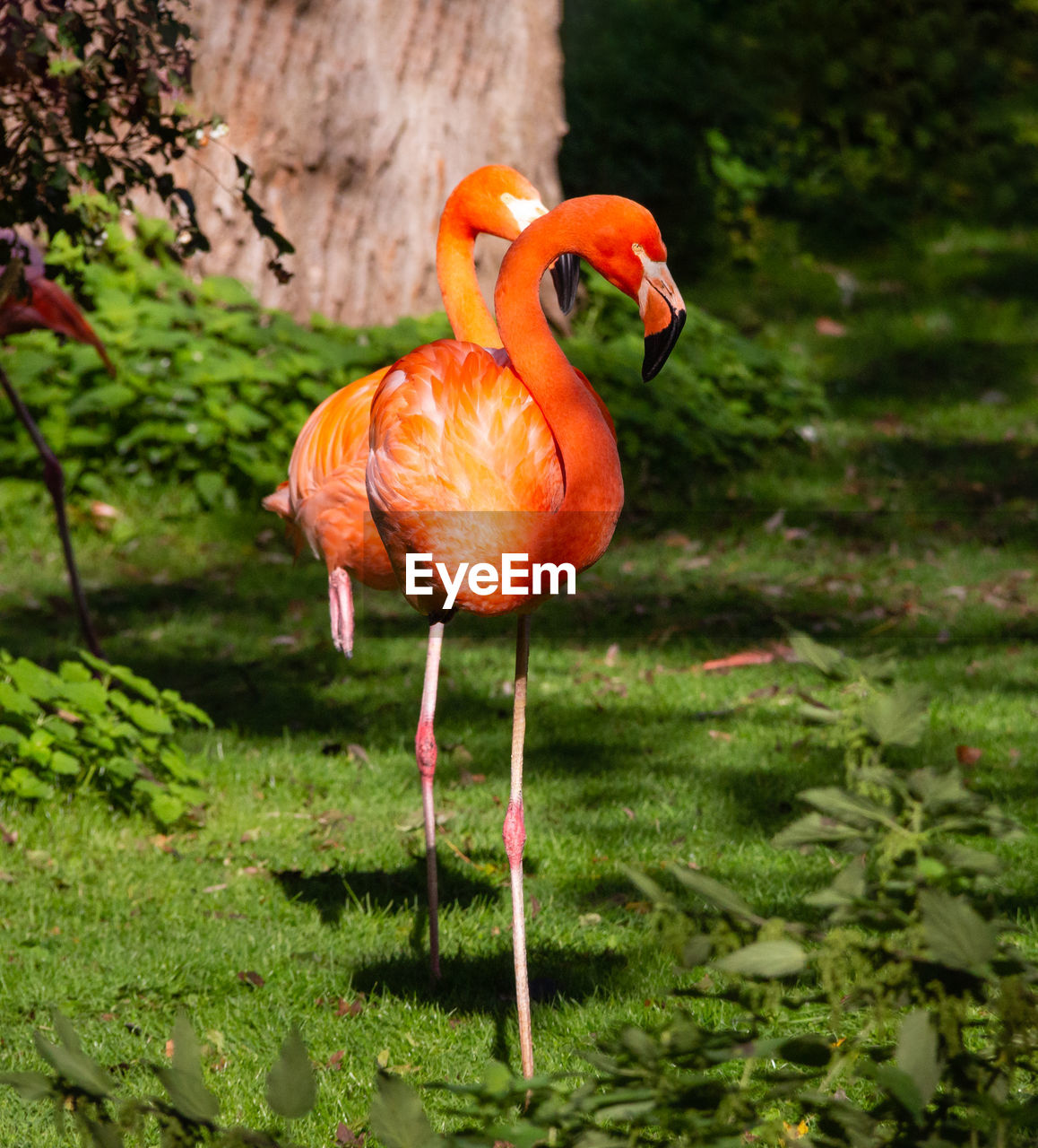 bird, animal themes, animal, vertebrate, animals in the wild, orange color, animal wildlife, plant, flamingo, no people, standing, one animal, day, nature, land, focus on foreground, grass, full length, beauty in nature, green color, outdoors, beak, animal neck