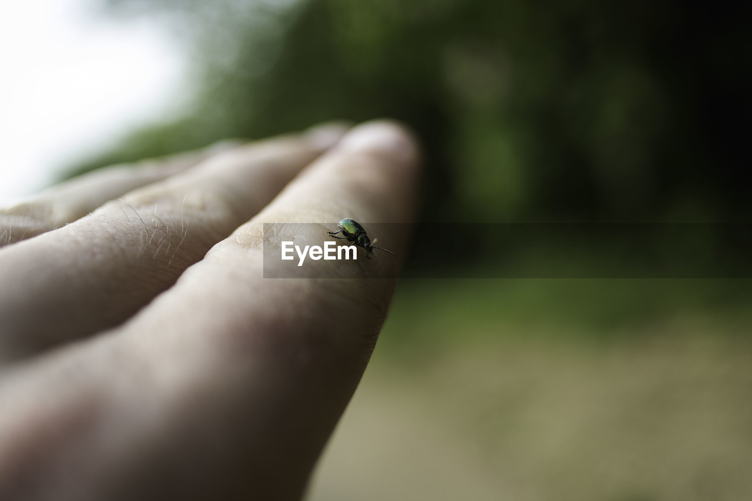 CLOSE-UP OF INSECT ON HUMAN HAND