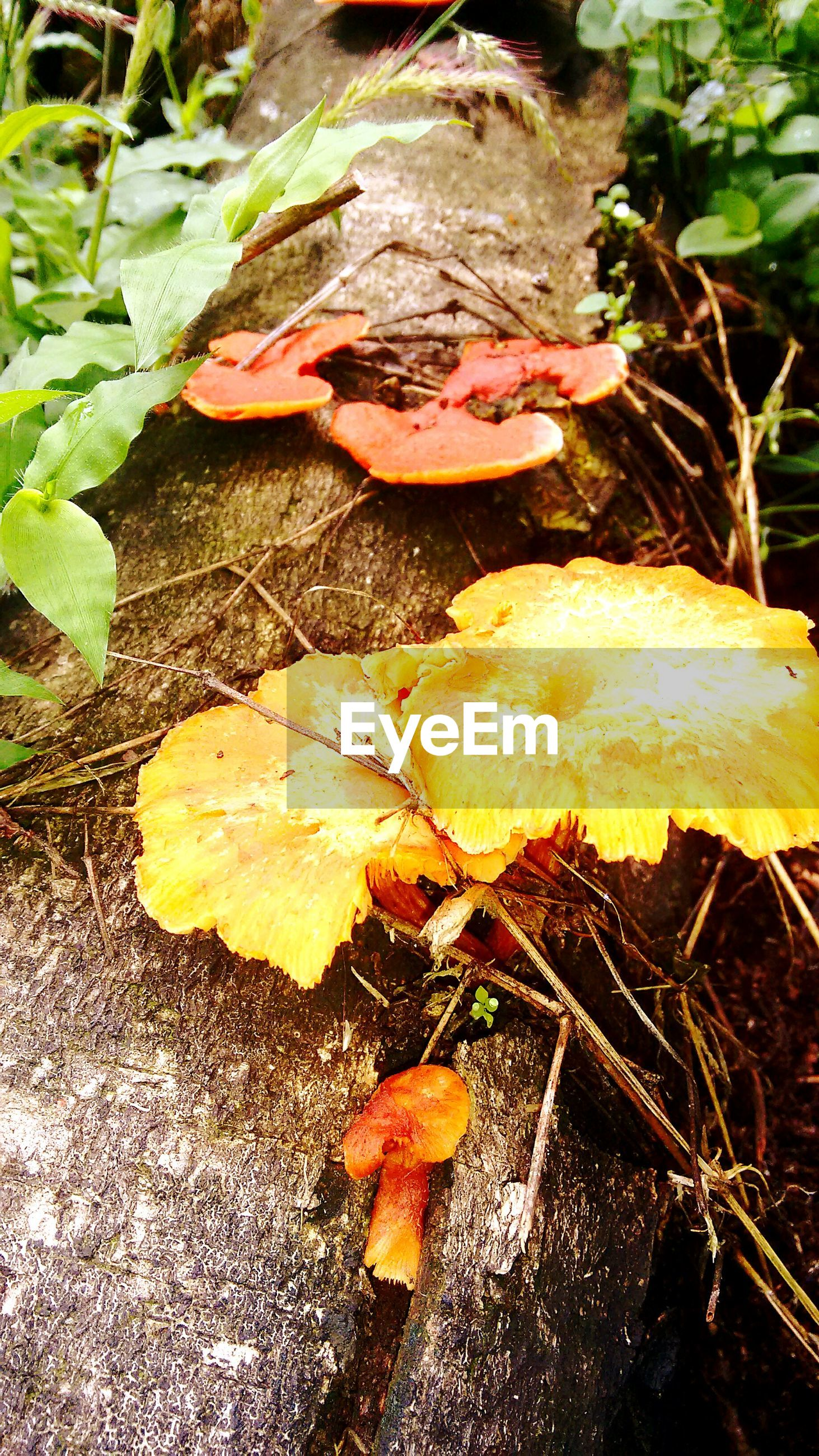 leaf, nature, fragility, close-up, dry, fungus, autumn, change, fallen, high angle view, mushroom, season, freshness, wet, plant, leaves, day, ground, growth, outdoors