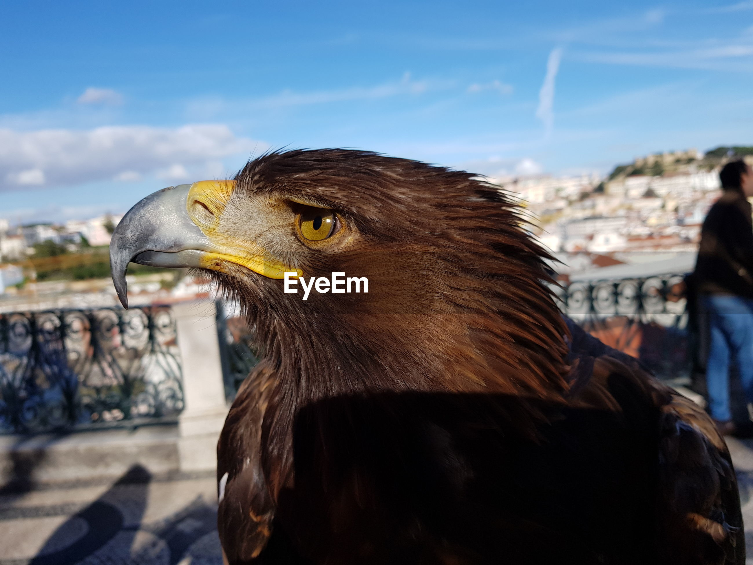 Close-up of eagle perching against sky
