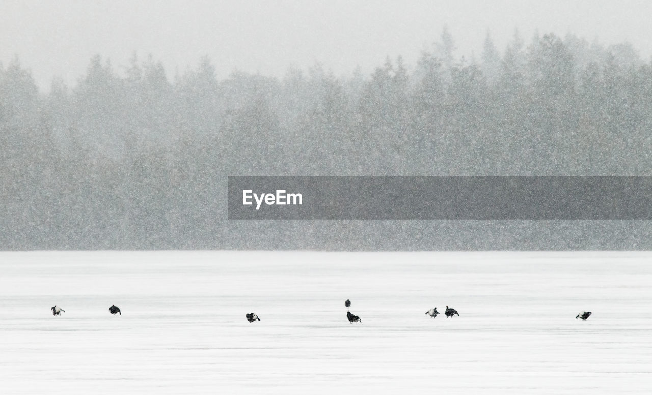 winter, bird, cold temperature, tree, animal wildlife, vertebrate, animal, animal themes, animals in the wild, group of animals, fog, beauty in nature, snow, lake, plant, nature, scenics - nature, day, no people