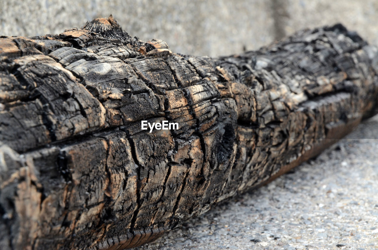 Close-up Of Wood Log
