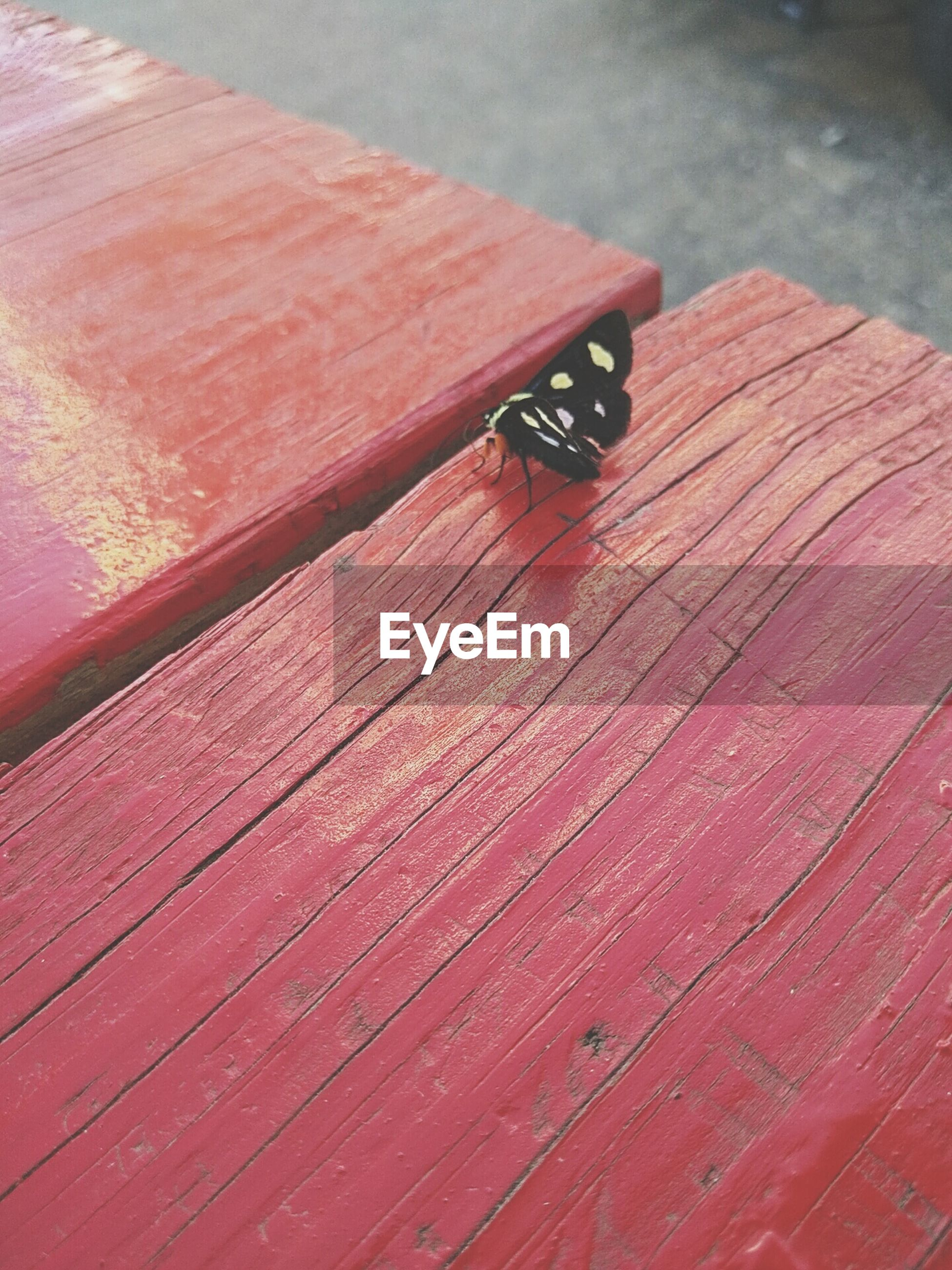 High angle view of butterfly on red table
