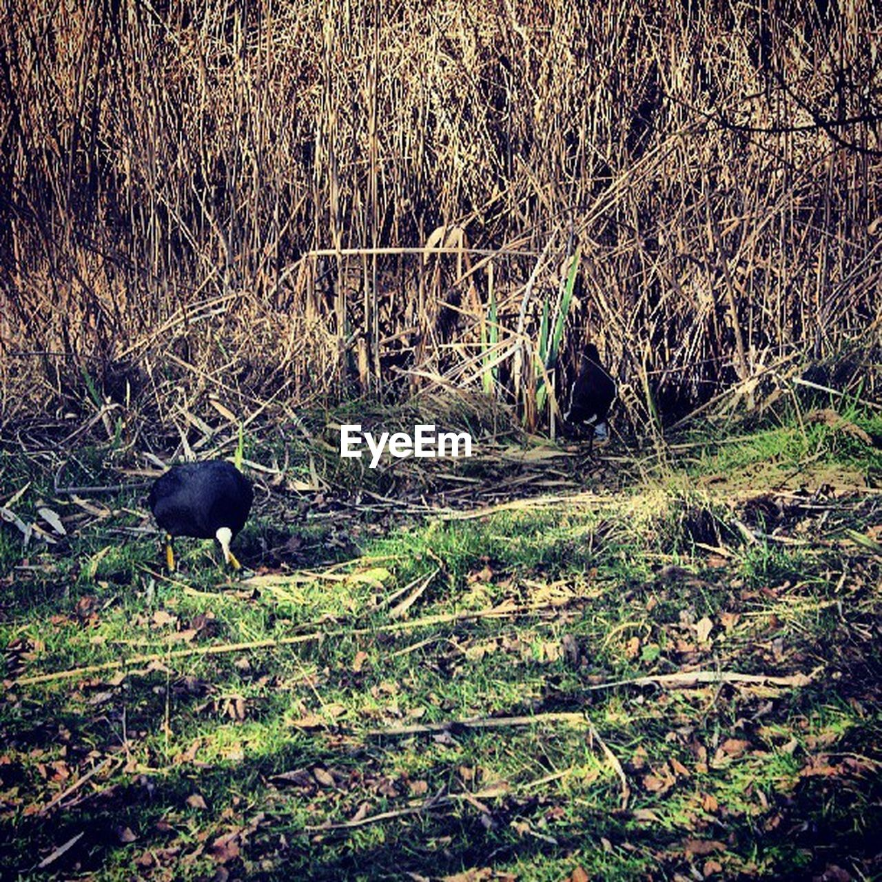 animal themes, nature, grass, one animal, domestic animals, field, outdoors, day, mammal, no people, animals in the wild, bird