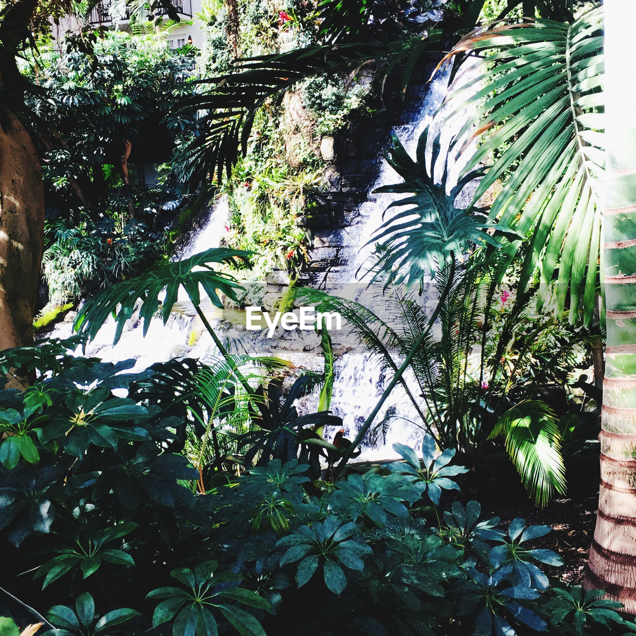 plant, growth, tree, leaf, plant part, day, green color, nature, no people, beauty in nature, outdoors, sunlight, tranquility, close-up, palm tree, green, foliage, lush foliage, tropical climate, land