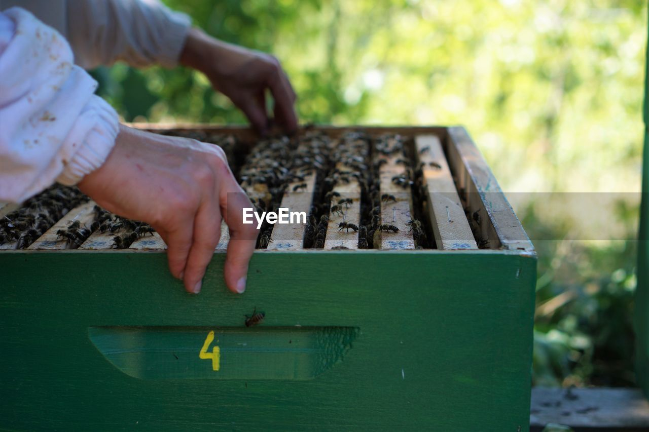 Midsection Of Beekeeper Holding Box