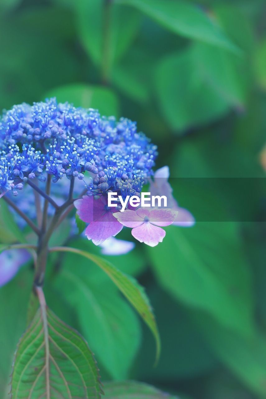 flower, beauty in nature, fragility, nature, growth, freshness, petal, purple, plant, green color, no people, leaf, day, outdoors, blooming, close-up, flower head