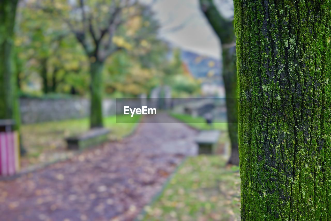 plant, tree, focus on foreground, day, green color, nature, no people, tranquility, growth, selective focus, footpath, trunk, tree trunk, outdoors, direction, tranquil scene, beauty in nature, the way forward, close-up, park, change
