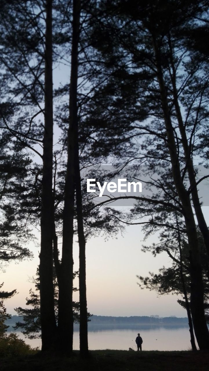 SILHOUETTE TREES BY PLANTS IN FOREST AGAINST SKY
