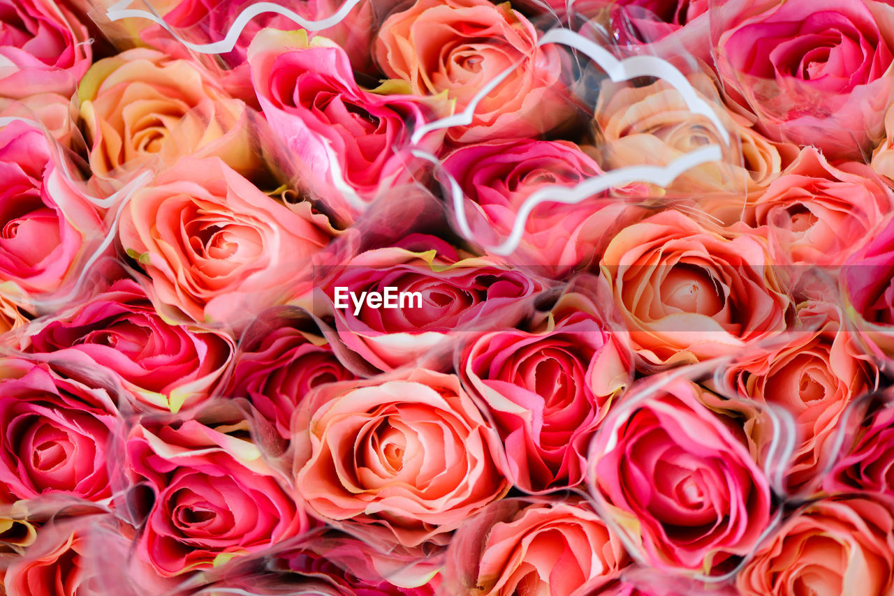 full frame, beauty in nature, backgrounds, close-up, flower, rose, plant, flower head, rose - flower, flowering plant, no people, inflorescence, freshness, pink color, petal, vulnerability, fragility, nature, flower arrangement, high angle view, bouquet, bunch of flowers, flower market, softness