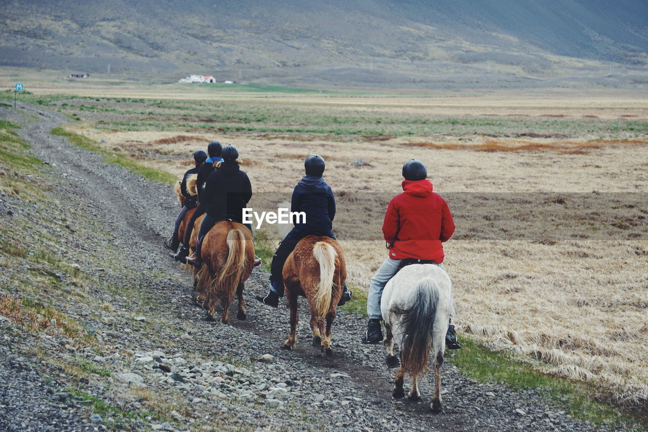 Rear View Of Friends Riding Icelandic Horses On Field