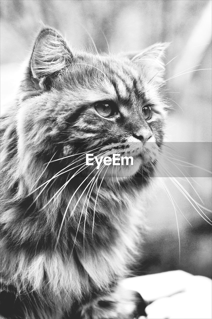 mammal, one animal, domestic, cat, domestic cat, domestic animals, pets, feline, whisker, vertebrate, close-up, looking away, looking, no people, focus on foreground, day, animal body part, animal eye