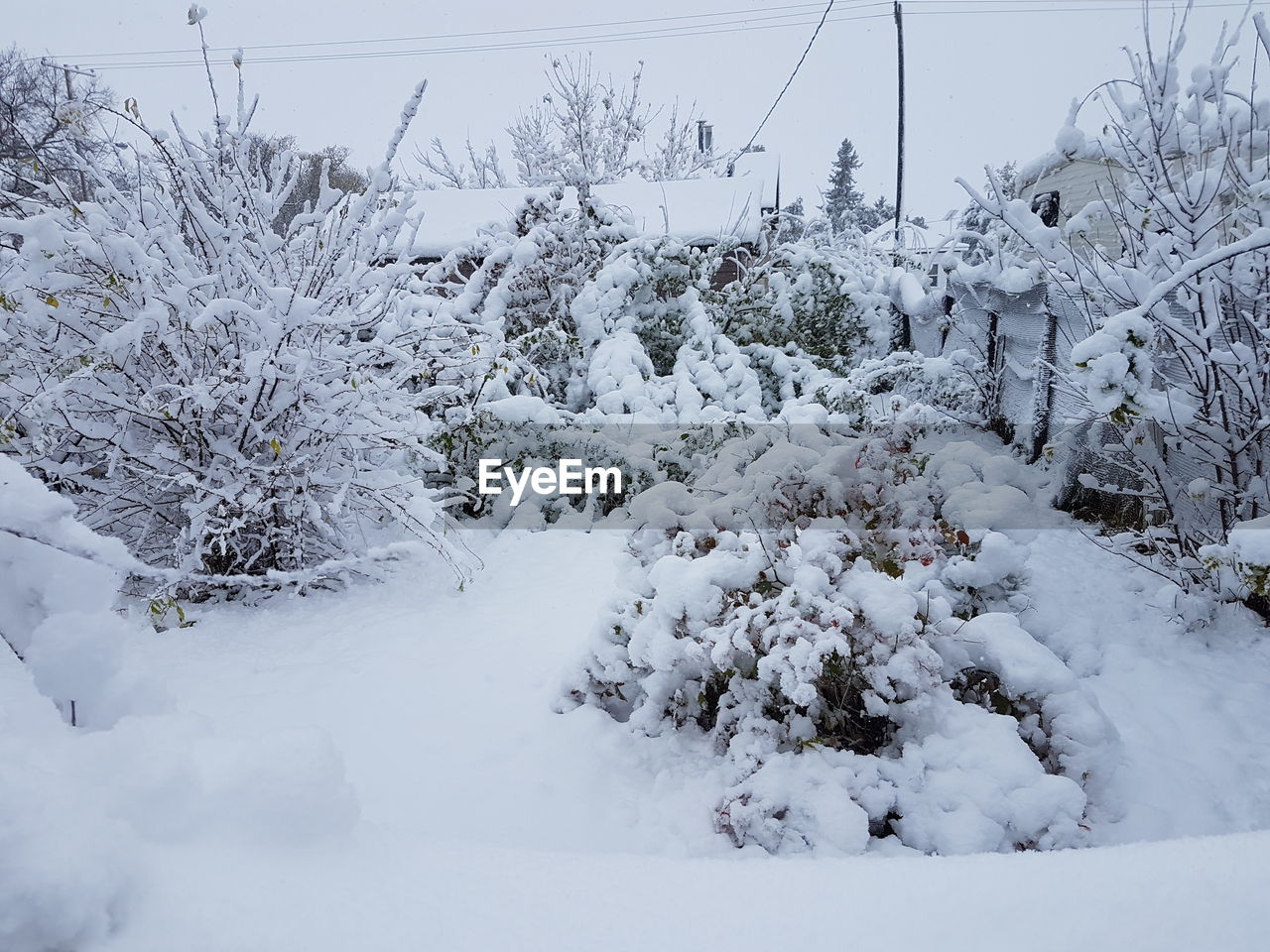 SNOW COVERED TREES ON FIELD DURING WINTER SEASON