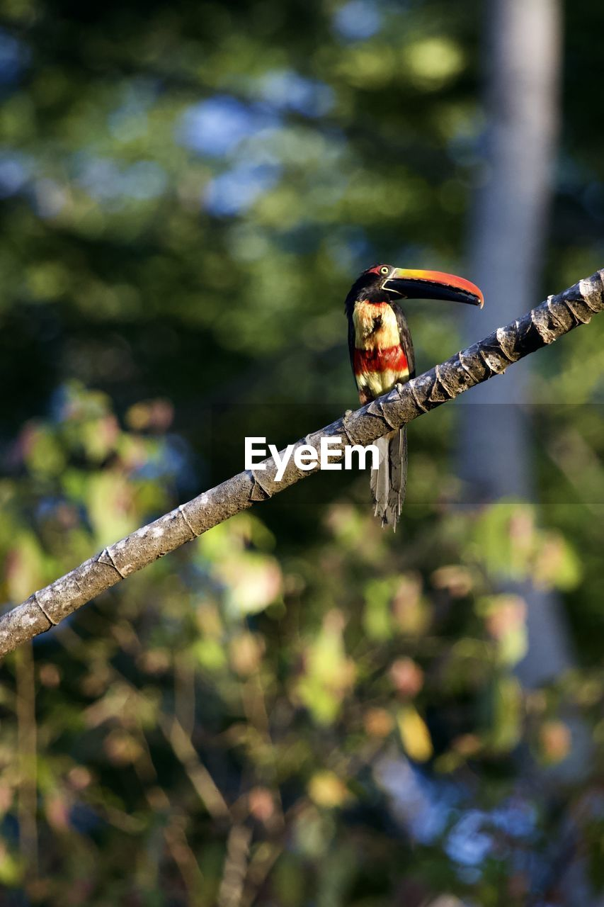 animal wildlife, animal themes, tree, plant, one animal, animals in the wild, animal, focus on foreground, invertebrate, branch, nature, day, no people, insect, vertebrate, outdoors, bird, perching, close-up, selective focus