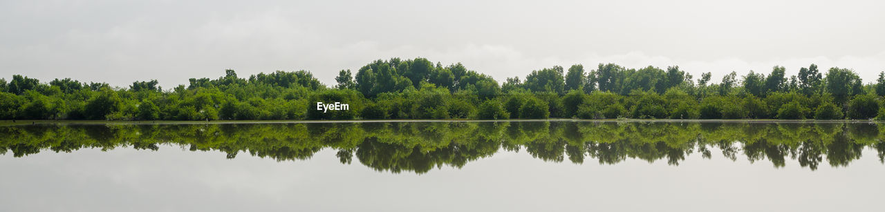 reflection, tree, nature, lake, waterfront, no people, sky, growth, water, tranquility, beauty in nature, scenics, outdoors, day