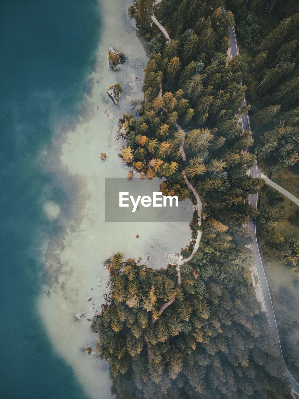 Directly Above Aerial Shot Of Pine Trees By Sea