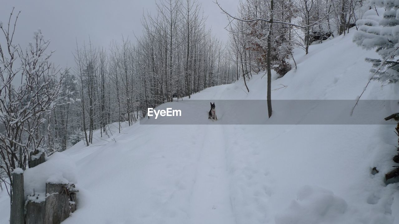 Dog on snow covered landscape during winter