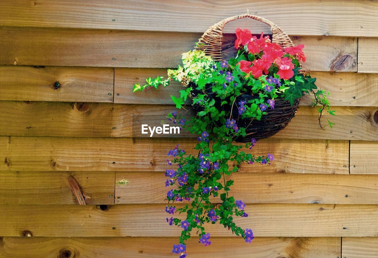 Close-up of flower basket hanging on wooden wall