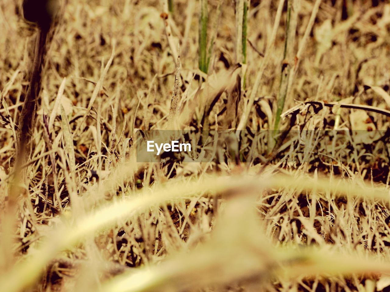 no people, selective focus, field, grass, nature, day, growth, outdoors, close-up