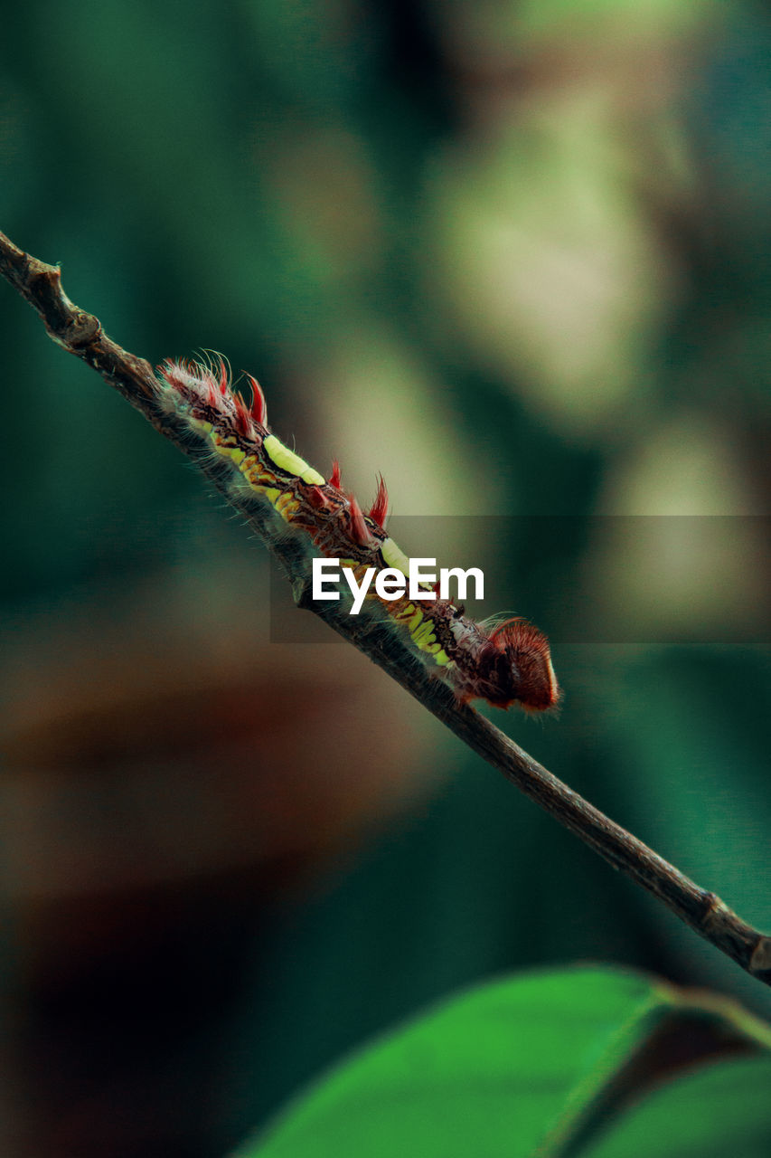 close-up, plant, nature, no people, focus on foreground, animal wildlife, selective focus, day, insect, animal, animal themes, animals in the wild, invertebrate, plant stem, beauty in nature, growth, plant part, leaf, one animal, outdoors
