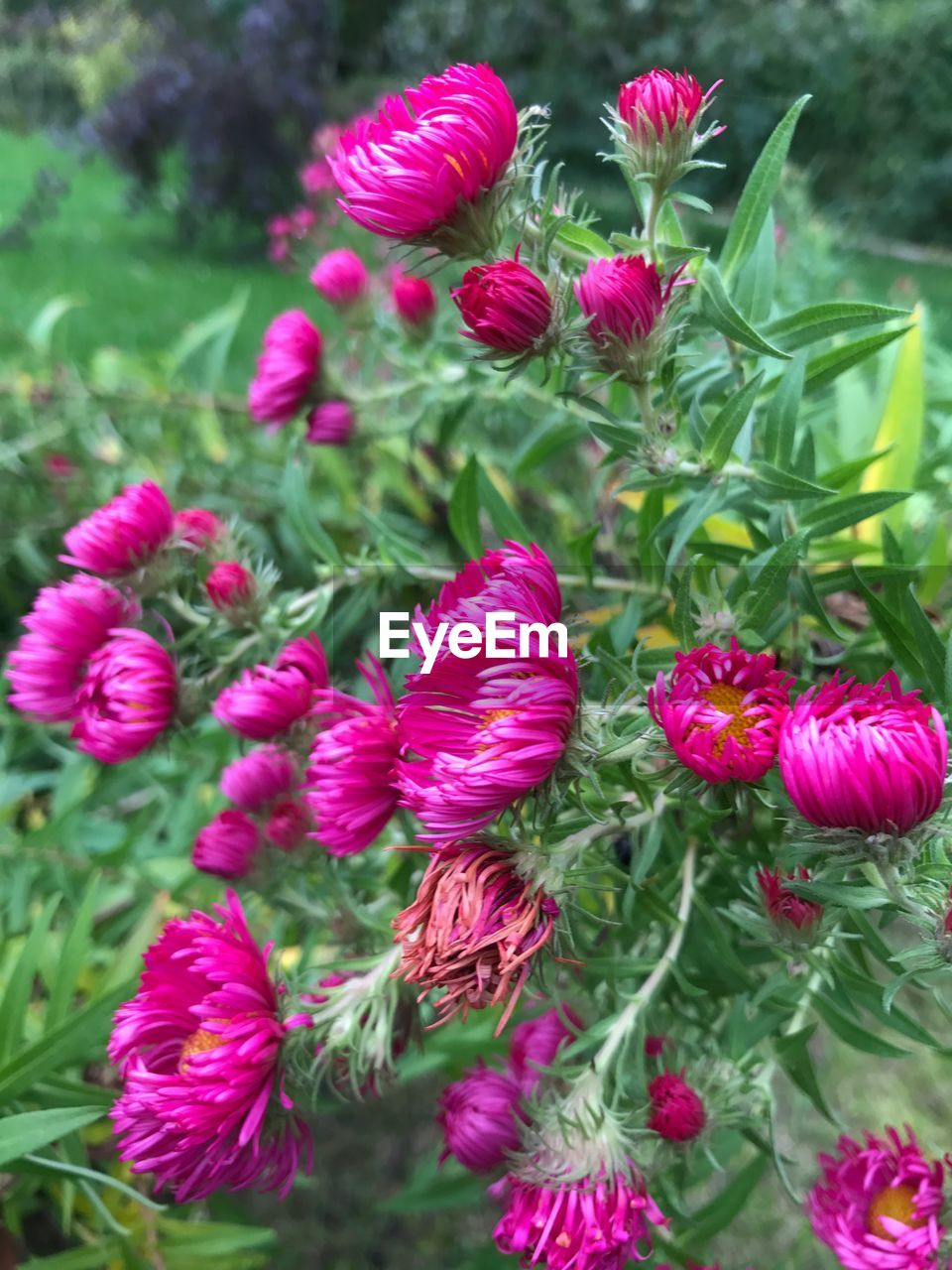 flower, growth, nature, beauty in nature, pink color, plant, green color, no people, freshness, fragility, outdoors, petal, flower head, day, close-up, red, blooming