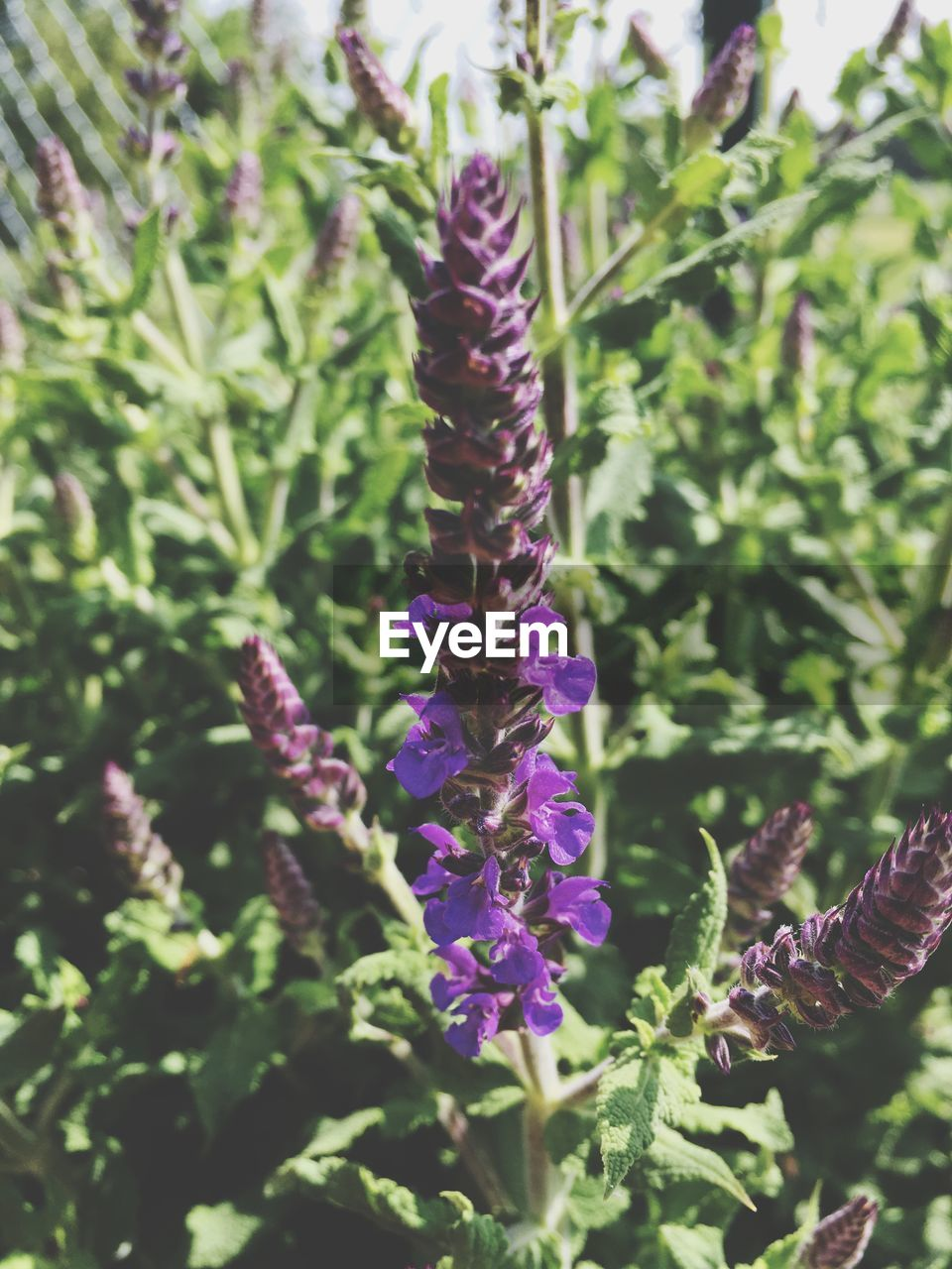purple, nature, growth, beauty in nature, plant, flower, fragility, day, outdoors, freshness, no people, green color, close-up, animal themes, flower head