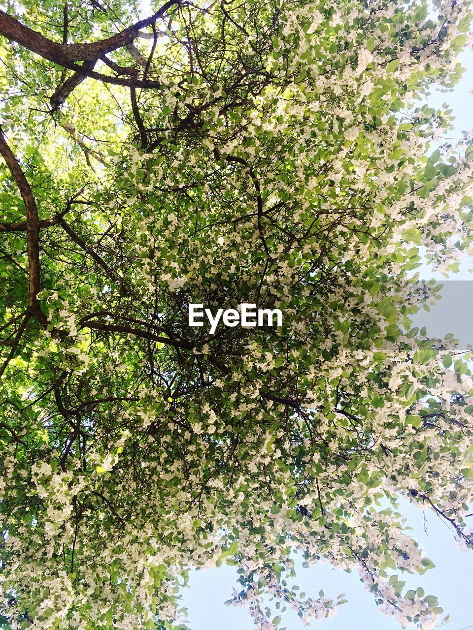 growth, tree, nature, low angle view, green, day, beauty in nature, branch, spring, no people, flower, outdoors, sky