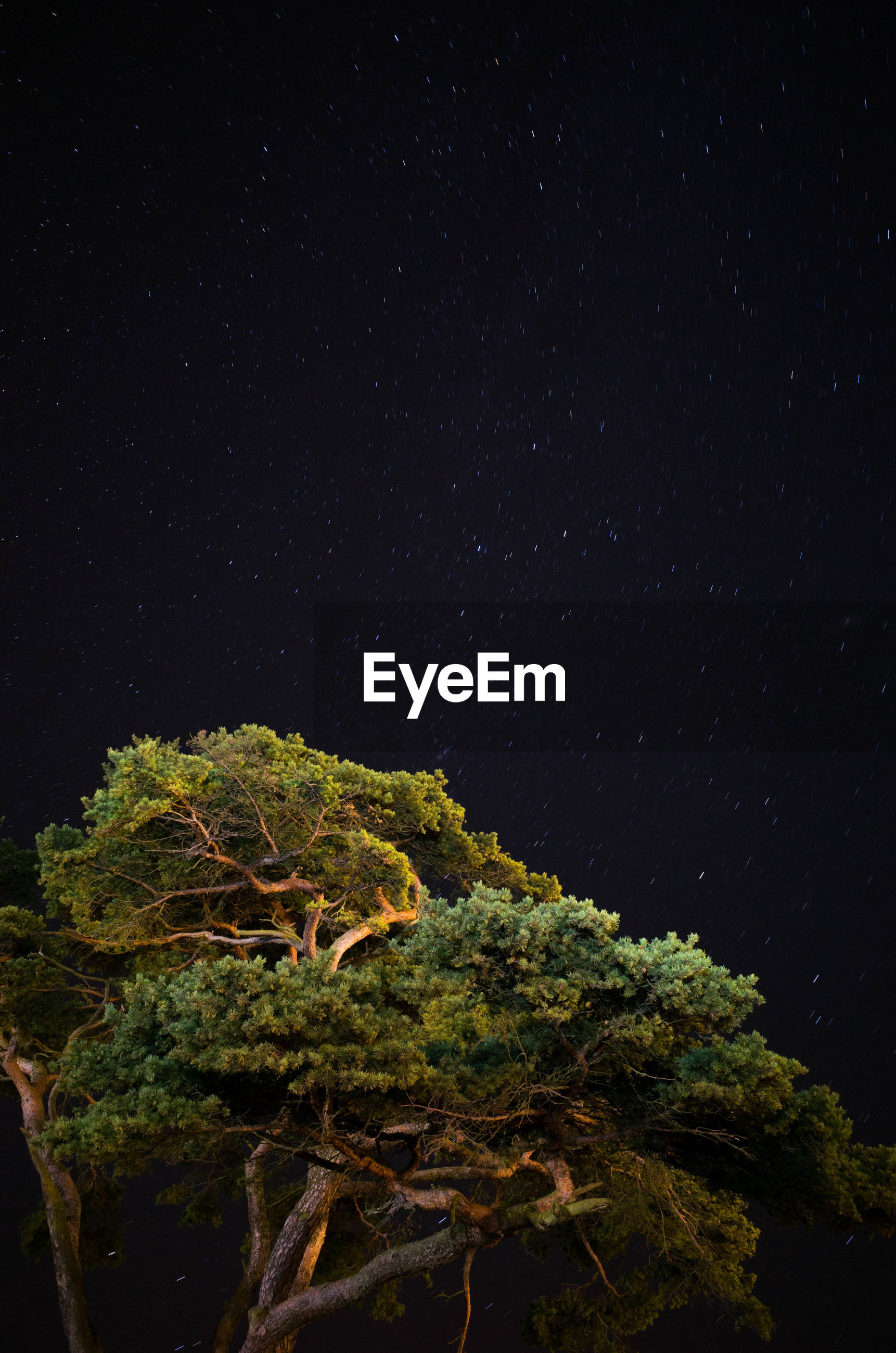 CLOSE-UP OF TREE AGAINST STAR FIELD AGAINST SKY