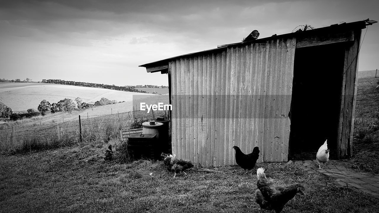 animal themes, animal, vertebrate, pets, domestic animals, sky, domestic, architecture, mammal, group of animals, built structure, nature, cloud - sky, building exterior, two animals, no people, day, bird, domestic cat, outdoors