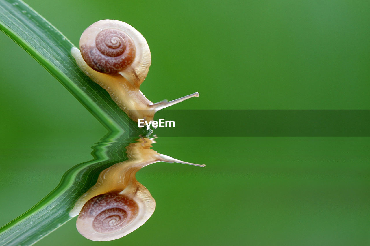 gastropod, mollusk, snail, close-up, invertebrate, shell, no people, animal wildlife, animal, animal themes, animal shell, green color, spiral, animals in the wild, nature, one animal, plant, animal antenna, focus on foreground, brown, small