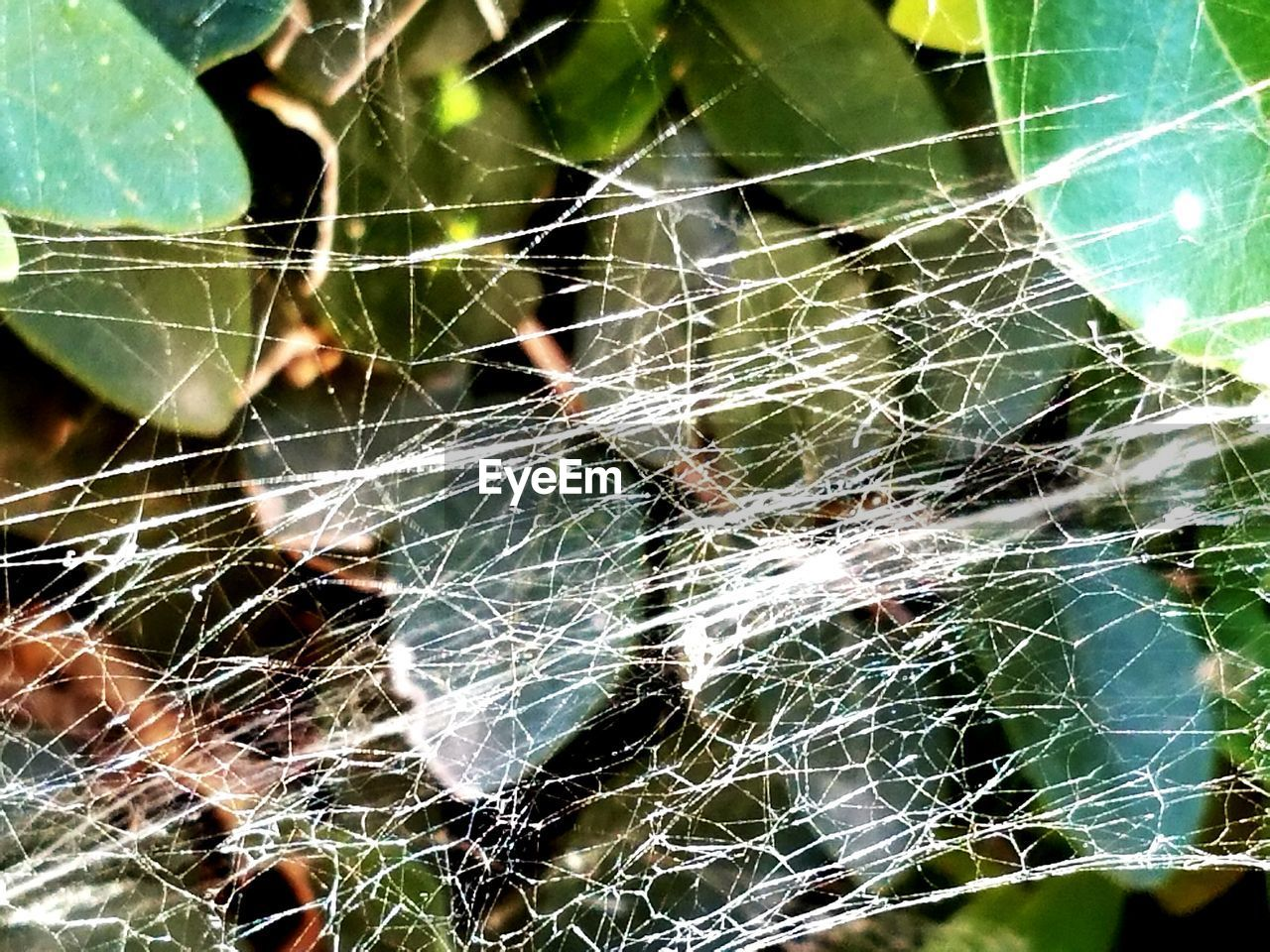 Close-up Of Tangled Spider Web Against Plants