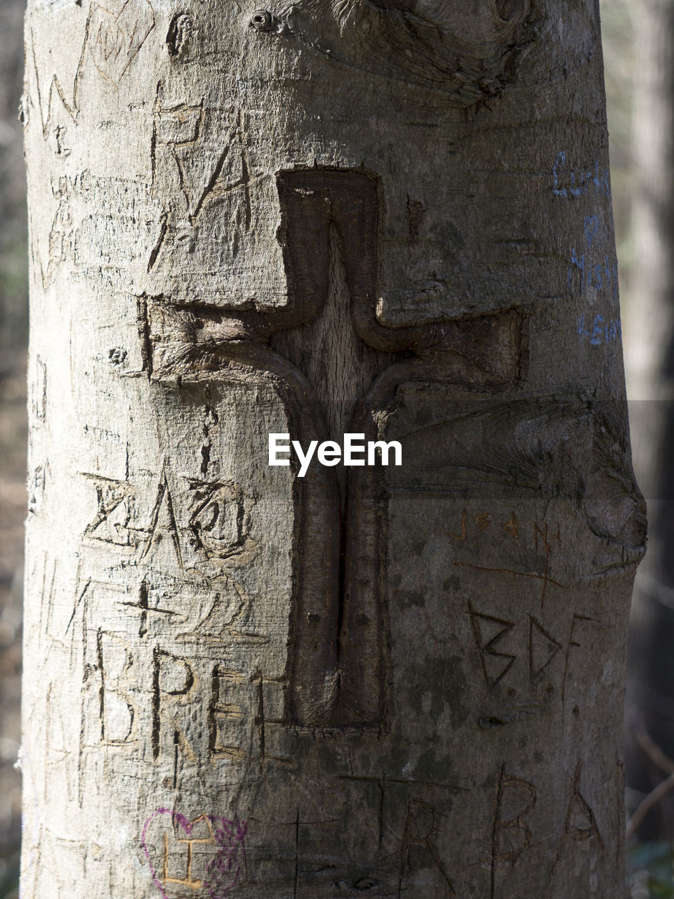 Close-Up Of Cross Carved On Tree Trunk