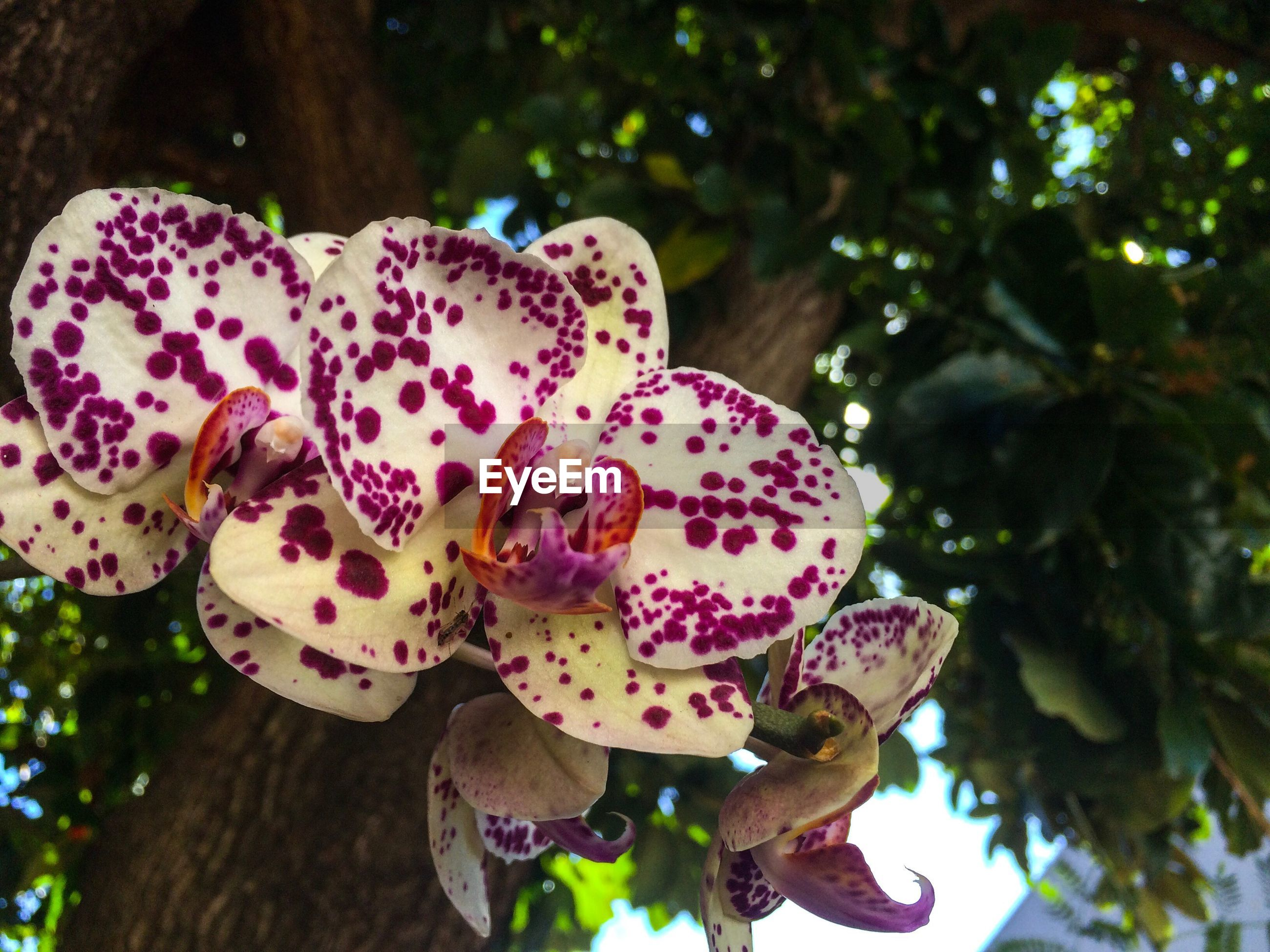 CLOSE-UP OF A FLOWER TREE