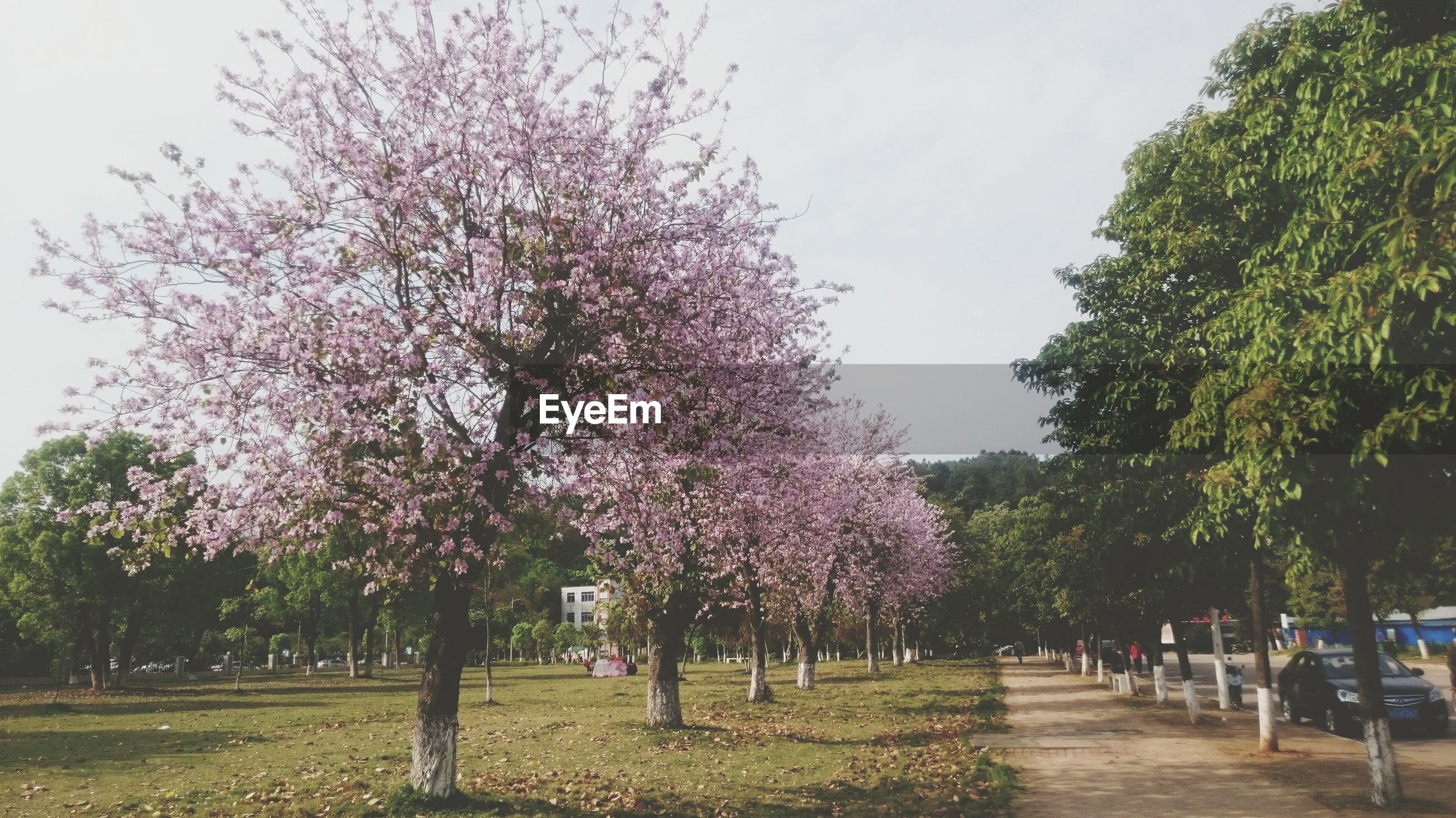 tree, growth, nature, sky, outdoors, day, beauty in nature, flower, freshness, no people