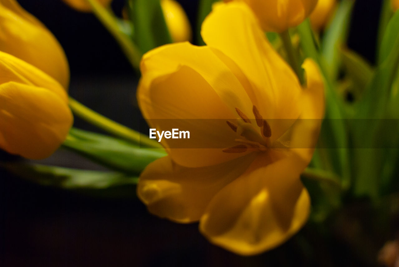 flowering plant, flower, petal, plant, freshness, fragility, beauty in nature, vulnerability, yellow, flower head, inflorescence, close-up, growth, selective focus, nature, no people, day, focus on foreground, botany, outdoors, pollen