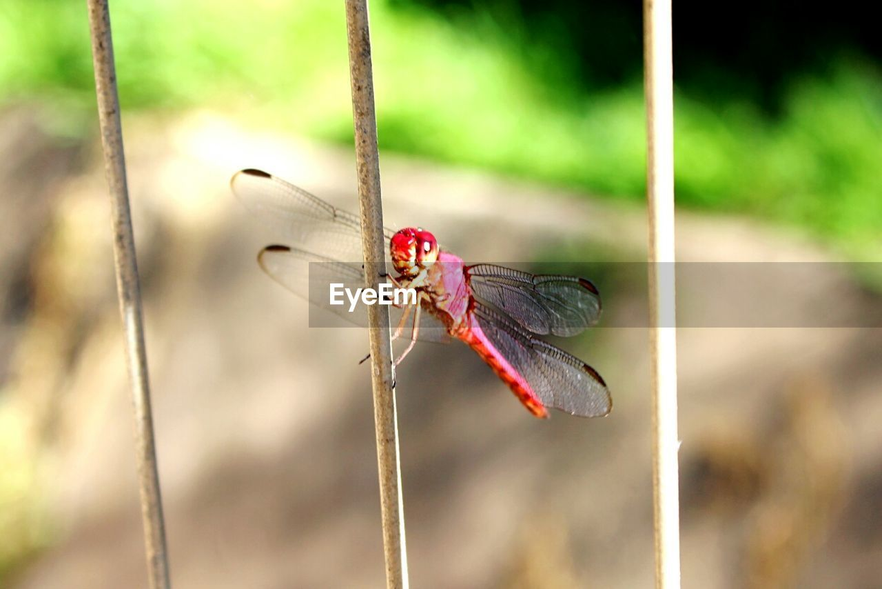 Close-Up Of Dragonfly On Metal Rod