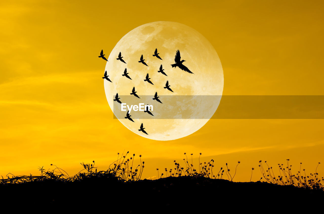 Silhouette Birds Flying Against Moon During Sunset