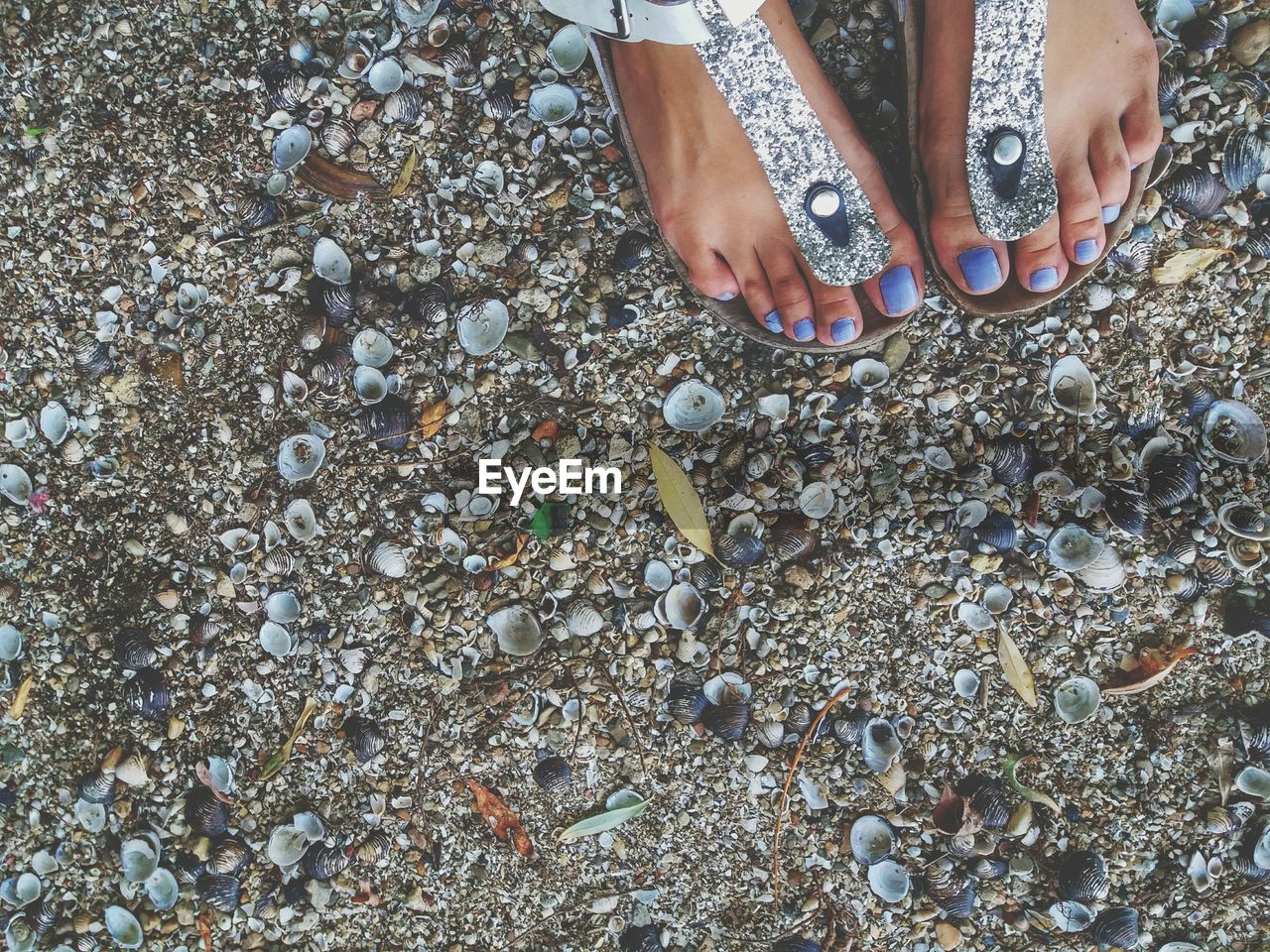 human body part, one person, body part, real people, low section, land, beach, stone - object, human hand, lifestyles, high angle view, day, nature, shell, solid, hand, human leg, leisure activity, pebble, outdoors, human foot, nail, human limb
