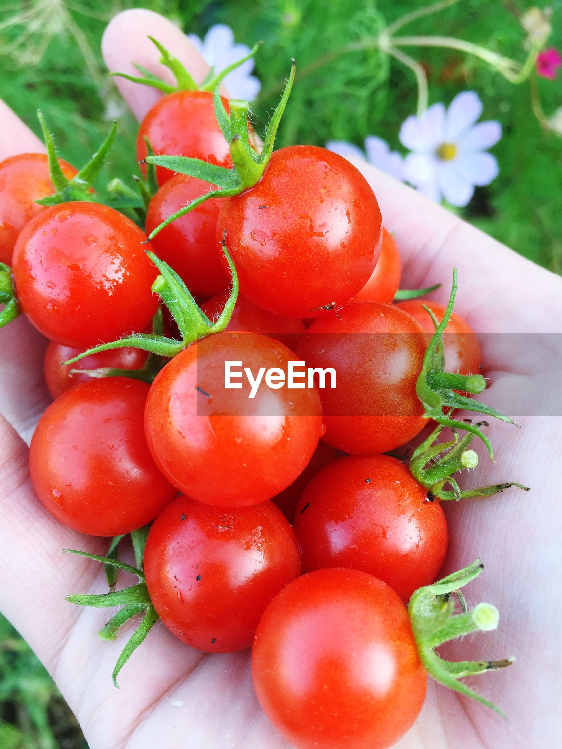 HIGH ANGLE VIEW OF TOMATOES WITH VEGETABLES