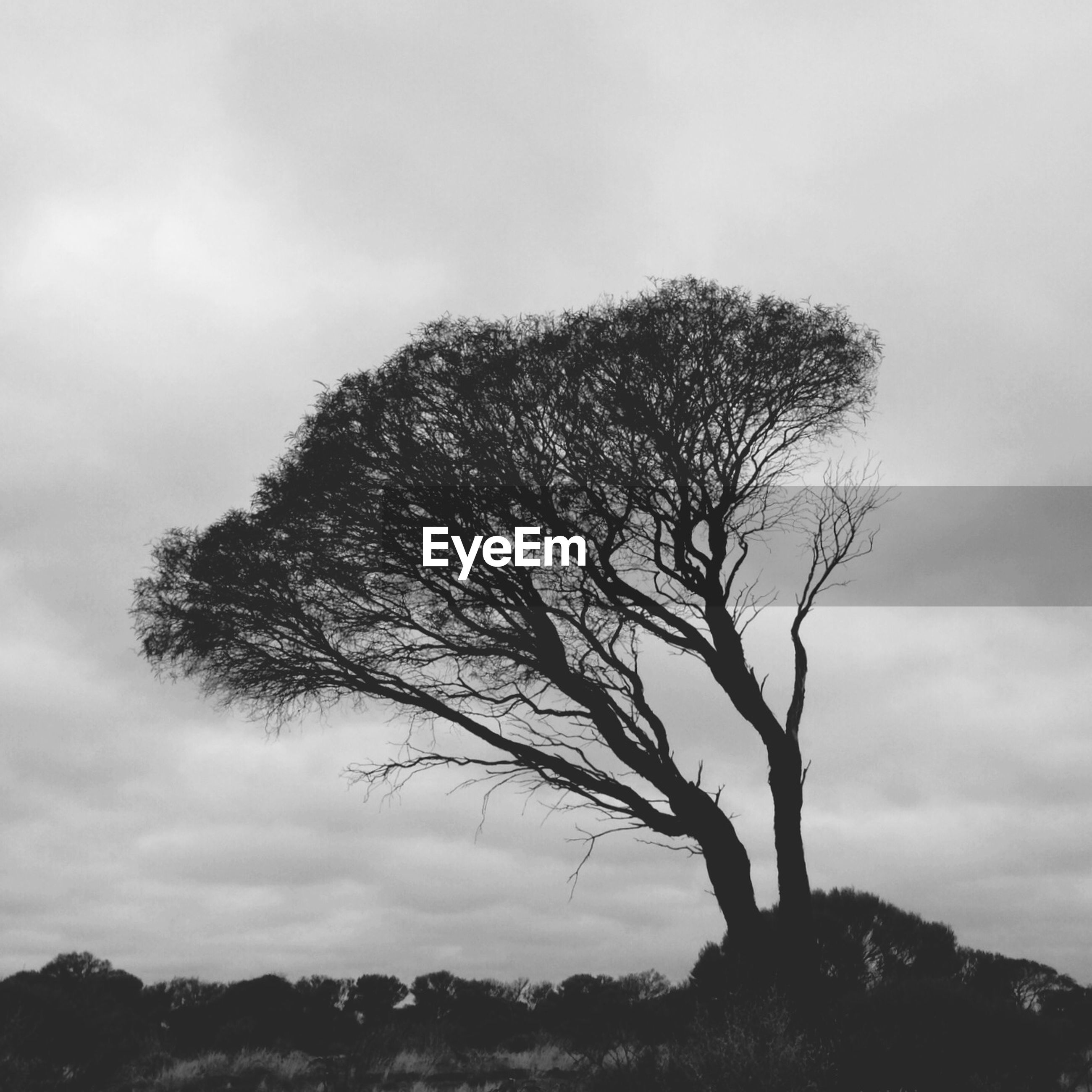 LOW ANGLE VIEW OF TREES AGAINST CLOUDY SKY