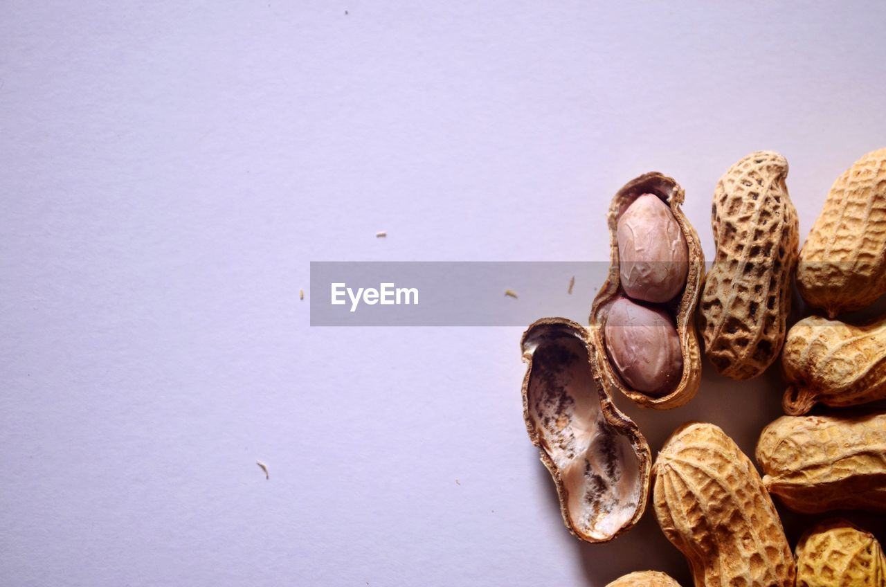 studio shot, copy space, close-up, no people, indoors, animal, nature, animal wildlife, animal themes, shell, nut, white background, high angle view, food, sea, food and drink, animals in the wild, nut - food, still life, one animal, marine