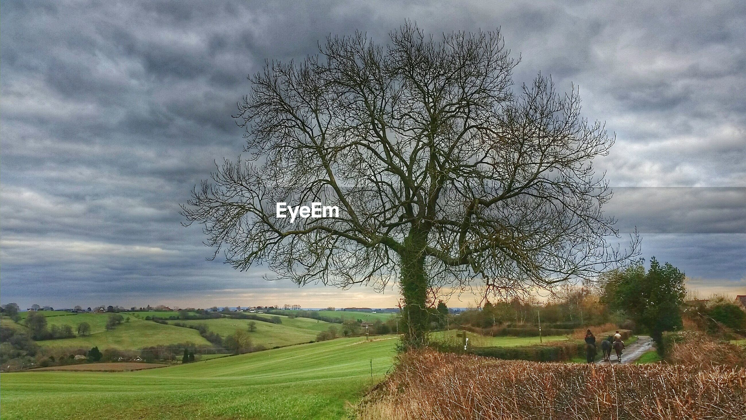 Bare Tree By Landscape Against Cloudy Sky