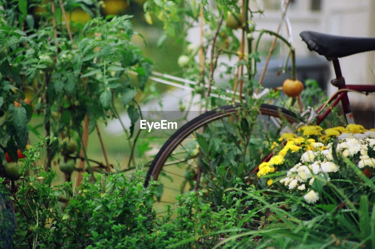 Close-up of plants against cropped bicycle